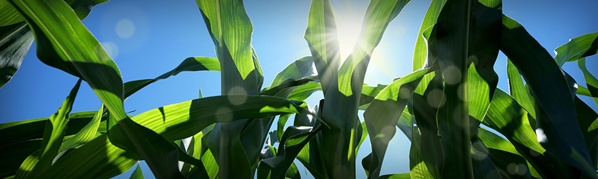 Agronomy-Header-1