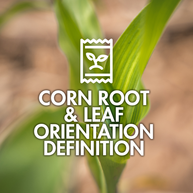 Corn Root & Leaf Orientation Definition