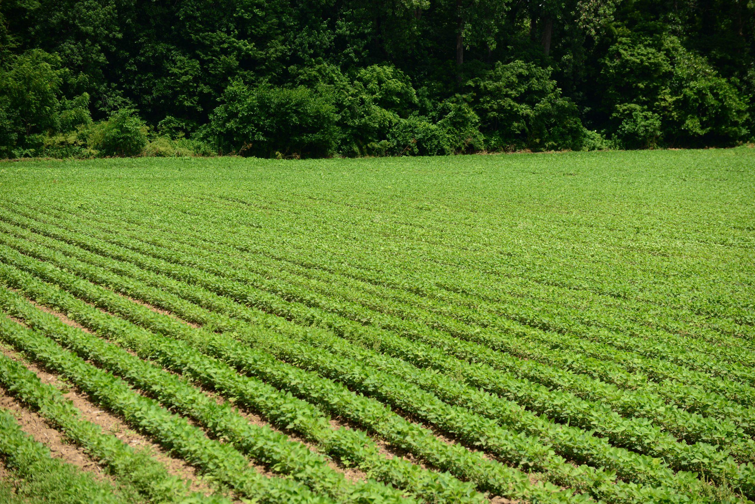 XtendiMax, soybeans, XtendFlex